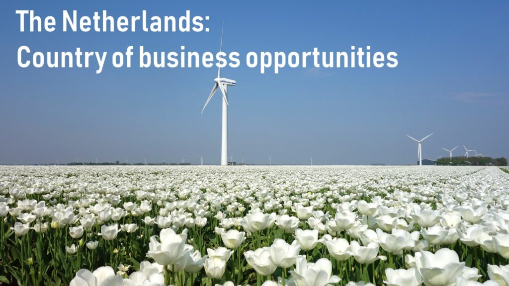 Netherlands-white tulips and wind mills